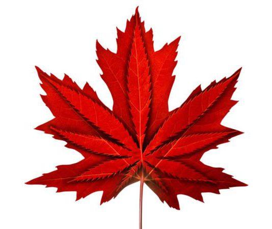 cannabis laws Alberta